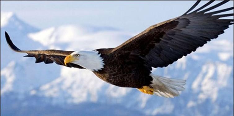 Eagle_Soaring1.jpg